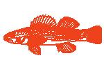 Svježa riba