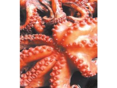KUHANA HOBOTNICA CIJELA (Octopus vulgaris)