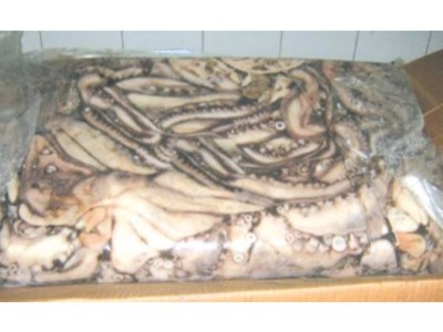 HOBOTNICA JADRANSKA (Octopus vulgaris)
